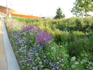 wildflower meadow olympic park photo two