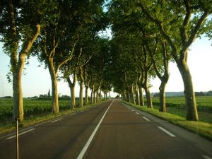 210409234752--Tree lined road